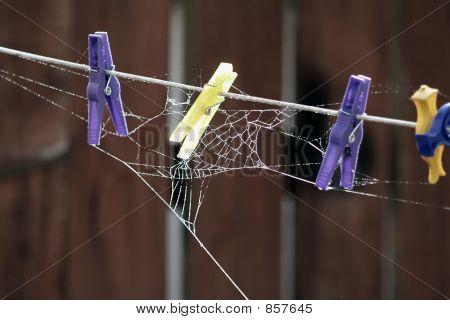 Laundry Neglect