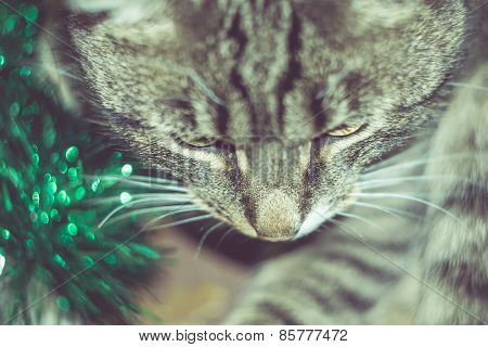 Retro Tabby Cat And Green Tinsel
