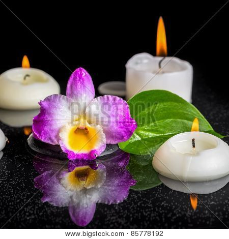 Spa Concept Of Purple Orchid Dendrobium, Green Leaf With Dew And Candles On Black Zen Stones In Refl