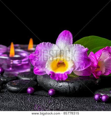 Spa Background Of Purple Orchid Dendrobium, Green Leaf Calla Lily And Candles On Black Zen Stones Wi