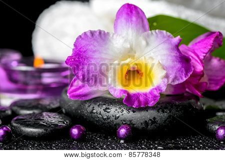 Spa Background Of Orchid Dendrobium, Green Leaf Calla Lily, Purple Candles, Towels And Beads On Zen