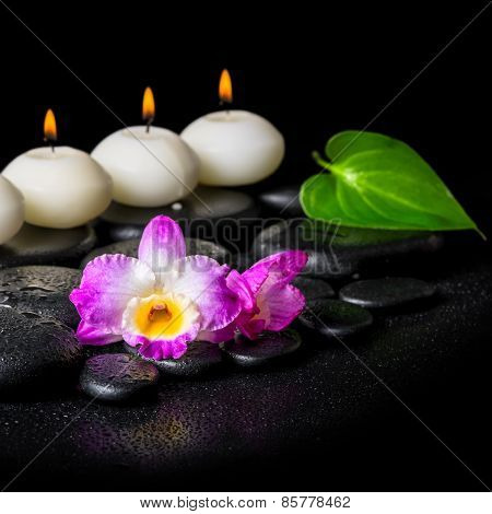 Spa Concept Of Orchid Flower, Green Leaf And Row White Candles On Black Zen Stones Background With D