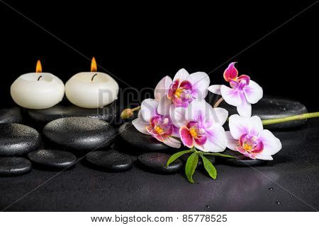 Beautiful Spa Still Life Of Purple Orchid Phalaenopsis And Green Leaf On Black Zen Stones With Drops