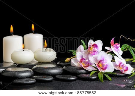 Beautiful Spa Still Life Of Purple Orchid Phalaenopsis Green Branch And Candles On Black Zen Stones