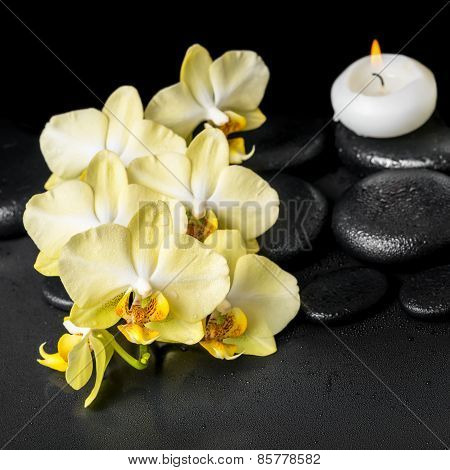 Beautiful Spa Setting Of Yellow Orchid Phalaenopsis And Candle On Black Zen Stones With Drops, Close