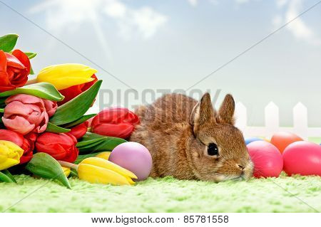 Bouquet of tulips and Easter Bunny