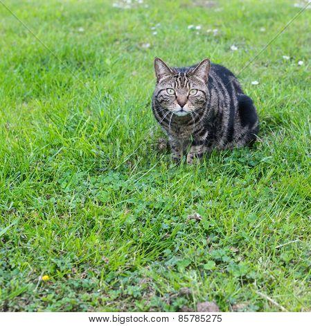 Domestic cat in a grass