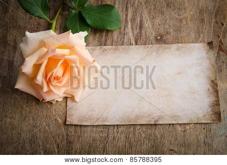 Delicate Cream Rose On Wooden Table