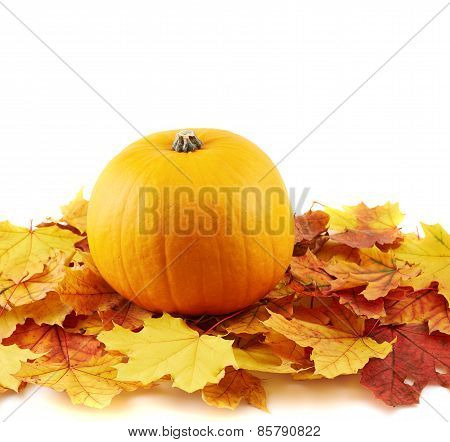 Orange pumpkin against maple-leaf composition