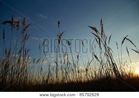 Sky With Dry Grass