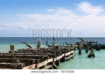 Caribbean old aged wooden dock with seagull and pelika