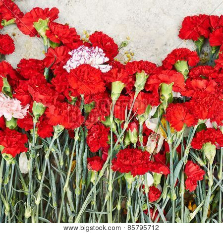 Pile of red dianthus flowers