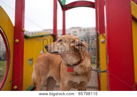 Yellow Puppy Standing On Playground