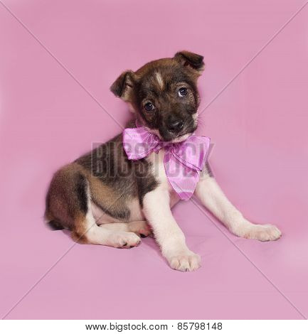 Brown And White Puppy With Bow Sitting On Pink
