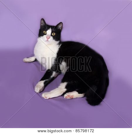 Black And White Cat Lying On Lilac
