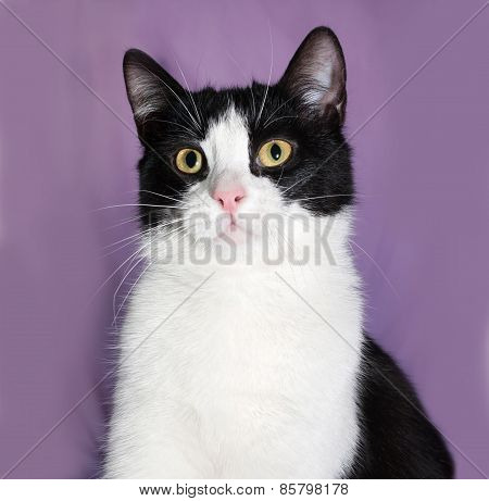 Black And White Cat On Lilac