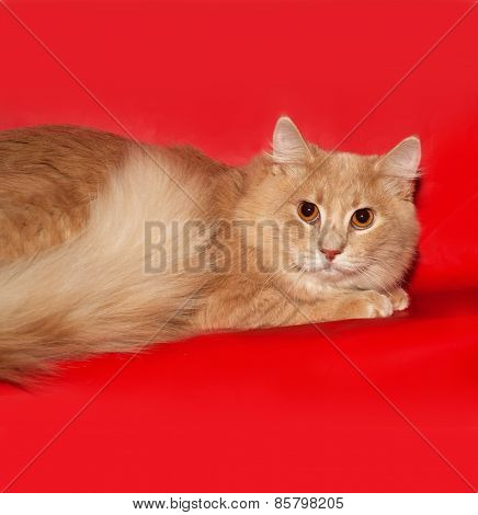 Ginger Cat Teenager Lying On Red