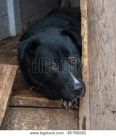Black And White Dog Lying In Booth