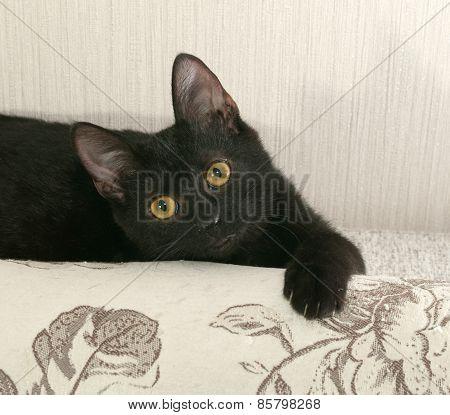 Black Kitten Lying On Couch