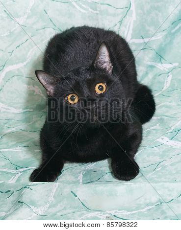 Black Cat With Yellow Eyes Lying On Green