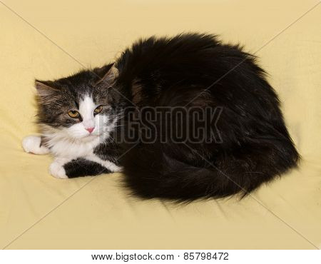Tricolor Fluffy Kitten Lying On Yellow