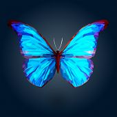stock photo of blue butterfly  - Blue butterfly with polygonal crystal texture on deep blue background - JPG