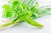 foto of leek  - parsley and leeks on white background - JPG