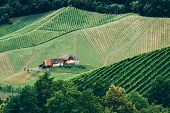 stock photo of farmhouse  - Vineyard in Styria at Summer with a Farmhouse - JPG