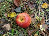 picture of bohemia  - autumn fruits - JPG
