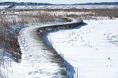 foto of marshes  - Snow - JPG