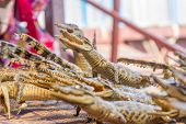 stock photo of crocodile  - small dead crocodiles in souvenir shop - JPG