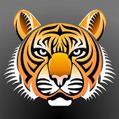 picture of zoo  - Tiger head front view - JPG