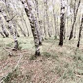 stock photo of italian alps  - Deciduous Forest in the Italian Alps Vintage Style Toned Picture - JPG