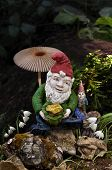 foto of gnome  - Gnomes in forest with mushroom - JPG