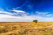 stock photo of veld  - Lonely tree on the yellow field with beautiful sky - JPG