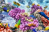 image of shoal fish  - Wonderful and beautiful underwater world with corals and tropical fish - JPG