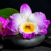 pic of calla  - spa still life of purple orchid dendrobium and green leaf Calla lily with drops on black zen stones closeup - JPG