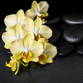 pic of yellow orchid  - beautiful spa still life of yellow orchid phalaenopsis on black zen stones with drops closeup - JPG