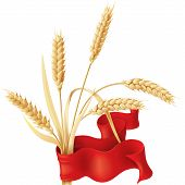 stock photo of ear  - Wheat ears tuft with red ribbon isolated on white - JPG