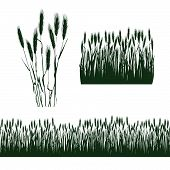 picture of ear  - silhouettes of decorative elements of grass and ears of wheat - JPG