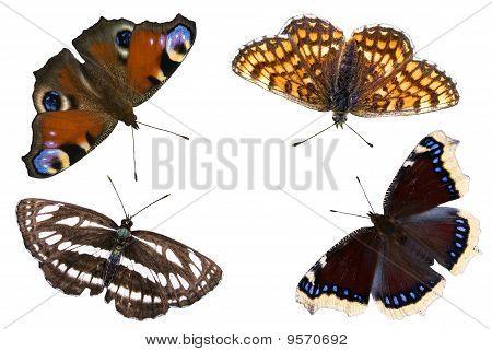 The Four Butterflies