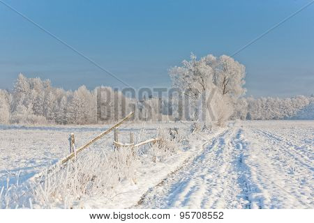 Winter Landscape With Trees Snow Wrapped And Road