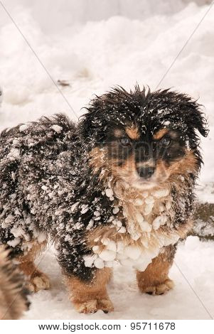 Cute Puppy Dog Running in the snow