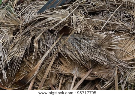 Dried Palm Leaves Texture Background