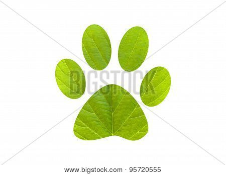 Green Foot Print Dog