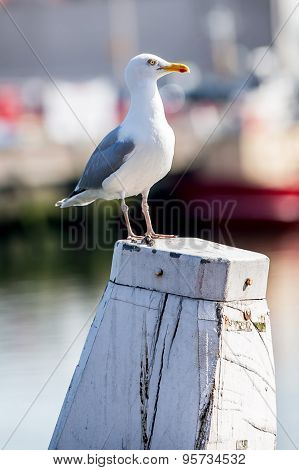 White Seagull On A Pillar In The Harbour With A Boat In The Background