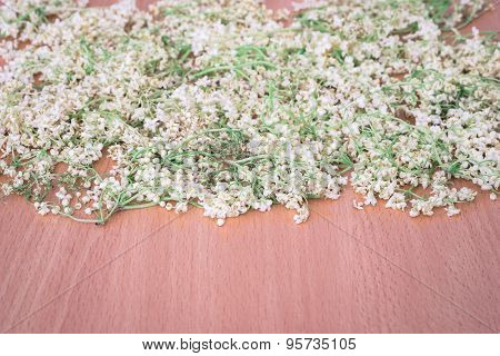 Dried Flowers Of Elderberry