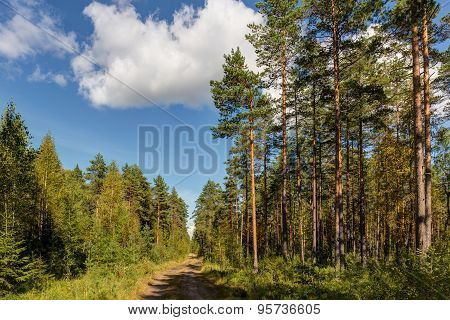 Road In A Sunny Forest