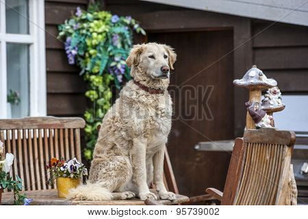 waiting_dog