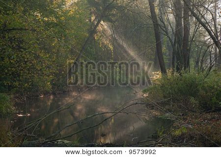 Autumnal Misty Morning By Forest River